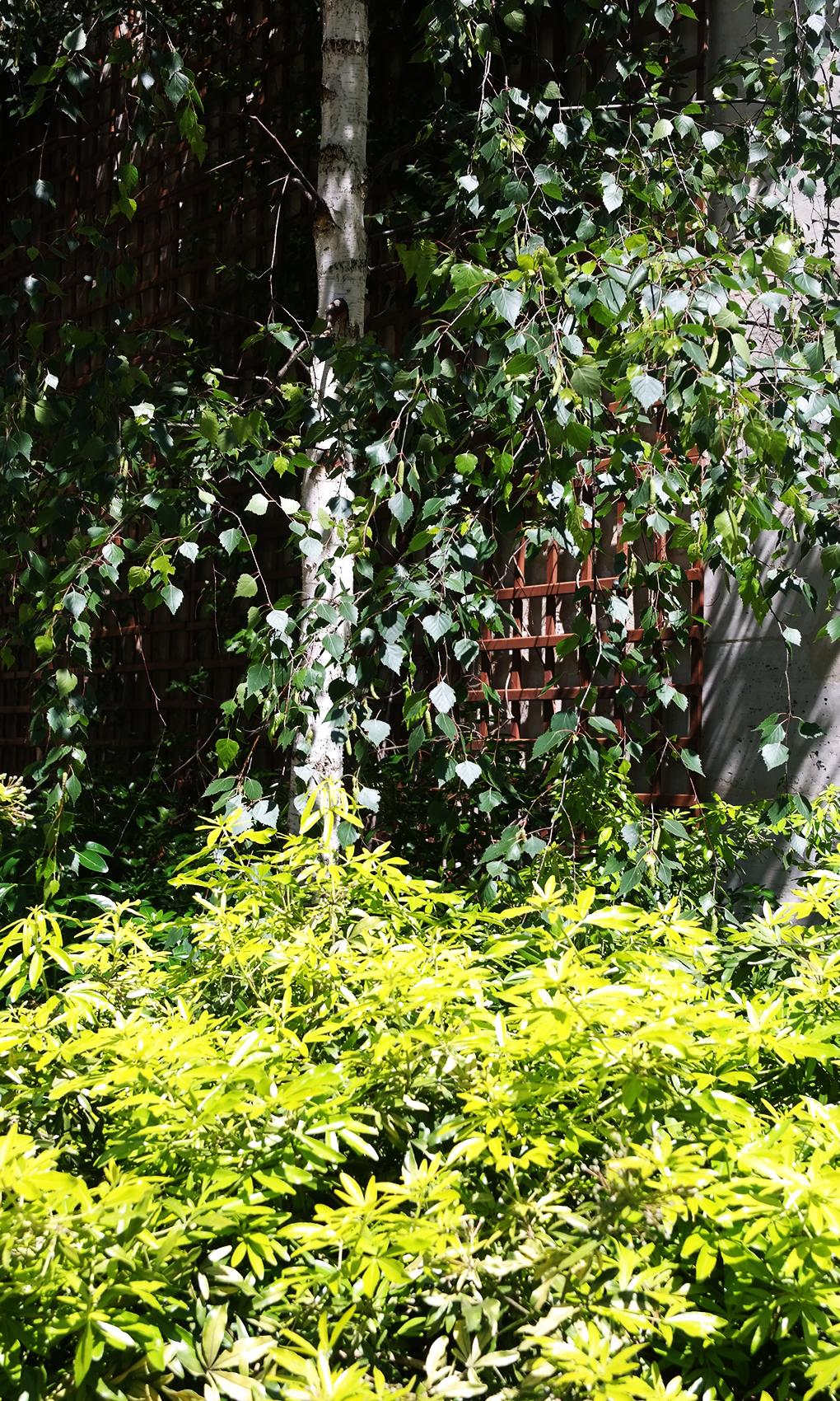 jardin_des_rosiers